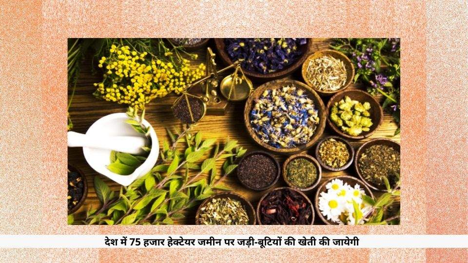 Medicinal Plants to be Cultivated in hindi