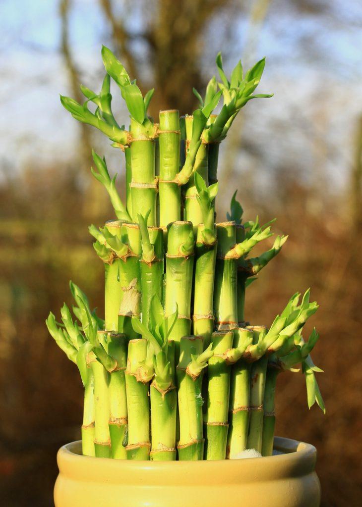 bamboo-588339_1280