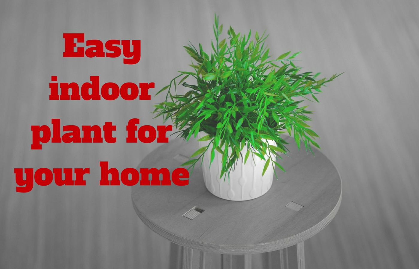 Easy indoor plant for your home