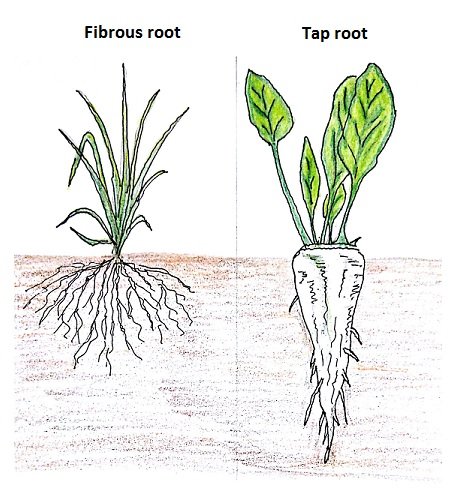 Root Shoot Systems