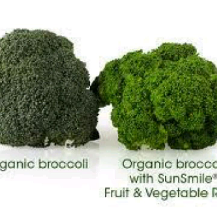 Sunrider Sunsmile Fruit And Vegetable Rinse, Paket 4 Botol1