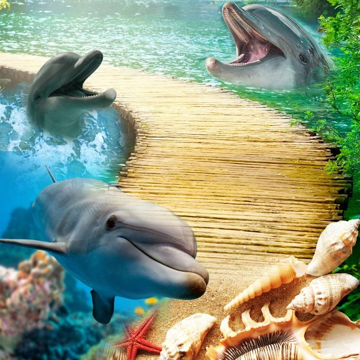 Wallpaper Custom Wallpaper 3d Wallpaper Lantai Dolphin
