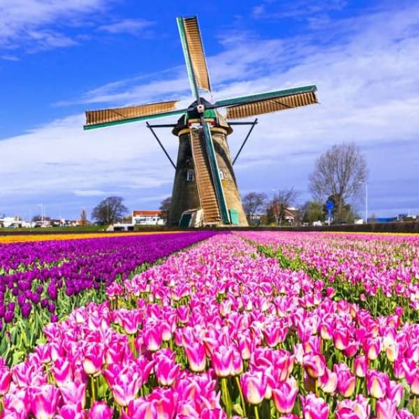Wallpaper Custom Wallpaper 3d Wallpaper Dinding Tulip Belanda Kincir Angin