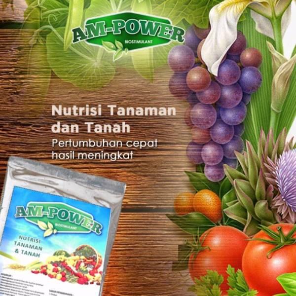 Am-power Bio Stimulant ( Nutrisi Tanaman & Tanah ) - Grosir1