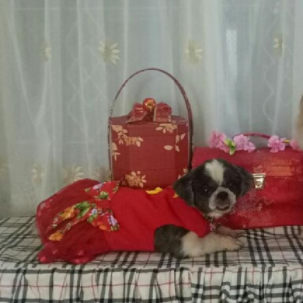 Baju Congsam Doggy2