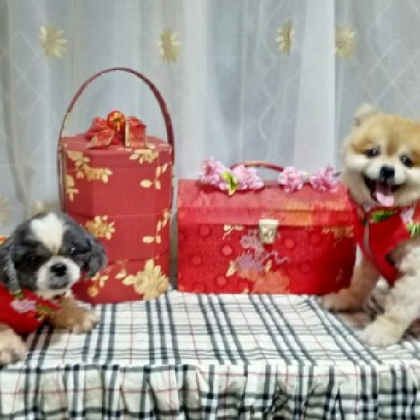 Baju Congsam Doggy3