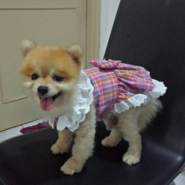 Baju - Baju Doggy4