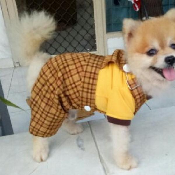 Baju - Baju Doggy3