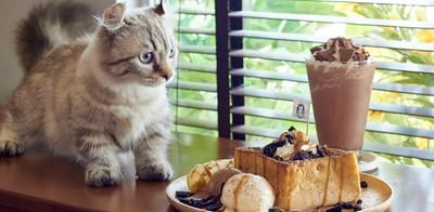 """""""Year of The Cat"""" ร้องเรียกเมี๊ยวๆ เดี๋ยวก็มา"""