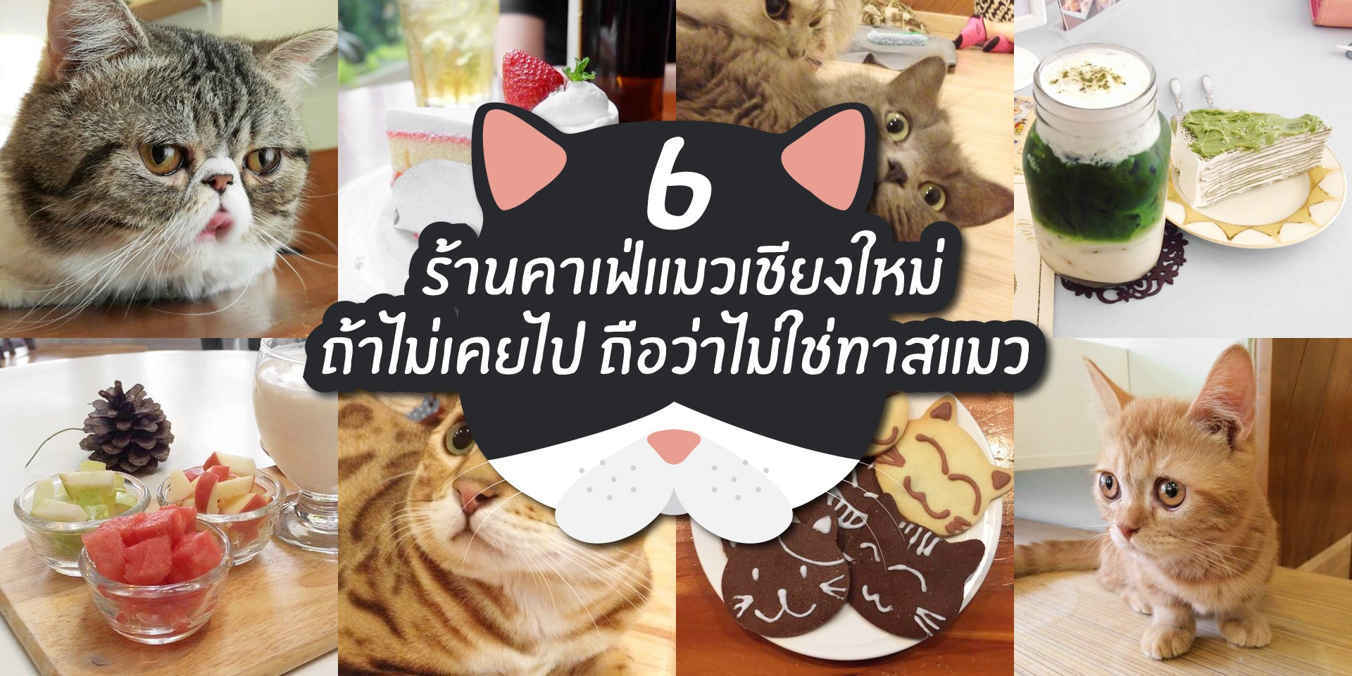 6 ร้านคาเฟ่แมวเชียงใหม่ ถ้าไม่เคยไป ถือว่าไม่ใช่ทาสแมว