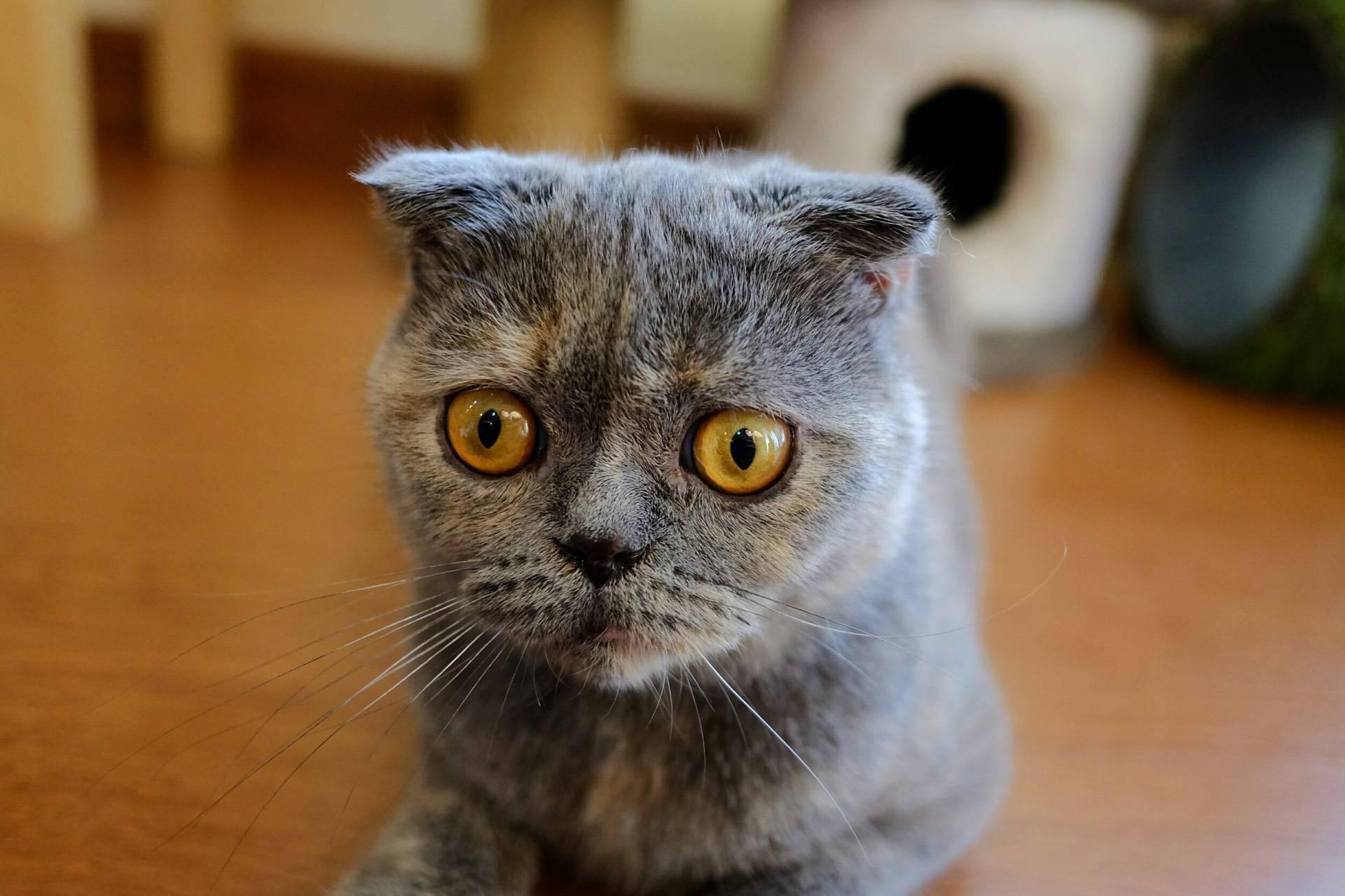 มังคุดจอมตะปบมือ555 ที่ ร้านอาหาร Cat human cafe