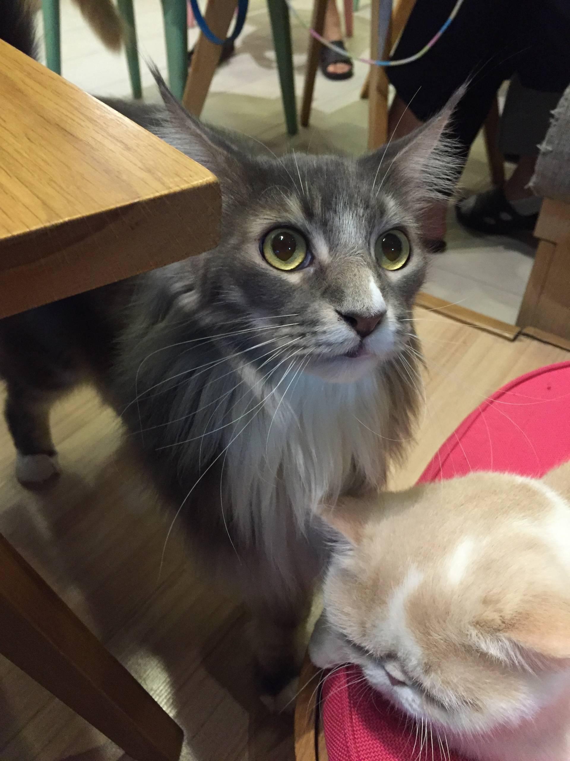 บรรยากาศร้าน • เจ้าแมวยักษ์ ที่ ร้านอาหาร Cat Up Cafe The UP Rama 3