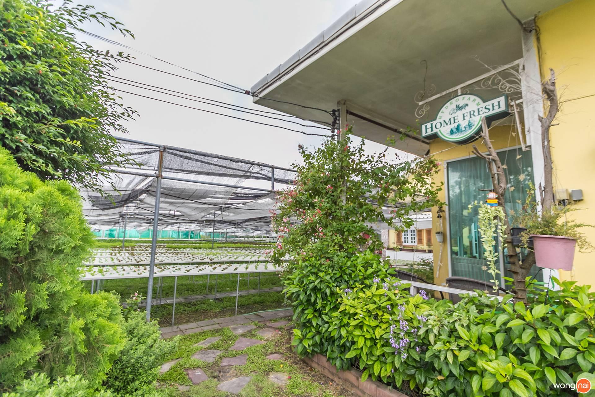 ร้านอาหาร Home Fresh Hydrofarm