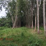 SOLD | CHERNGTALAY 1.5 RAI LAND FOR SALE