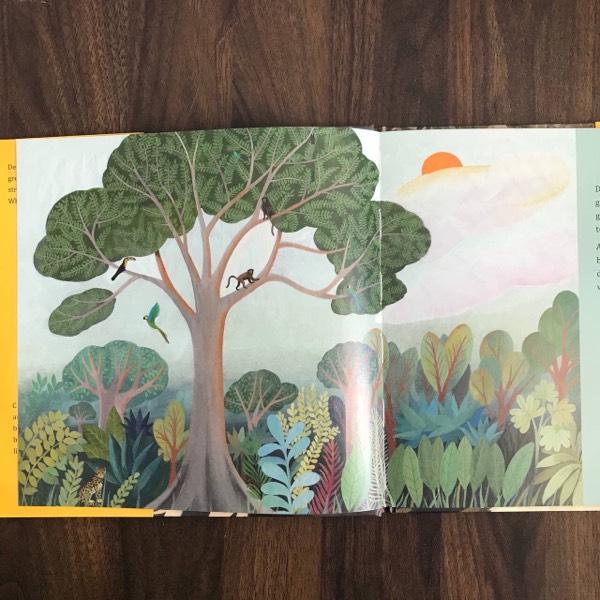 Tree Of Wonder1