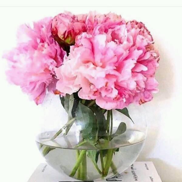 Peony flowers 2.0 (SAMPLE)