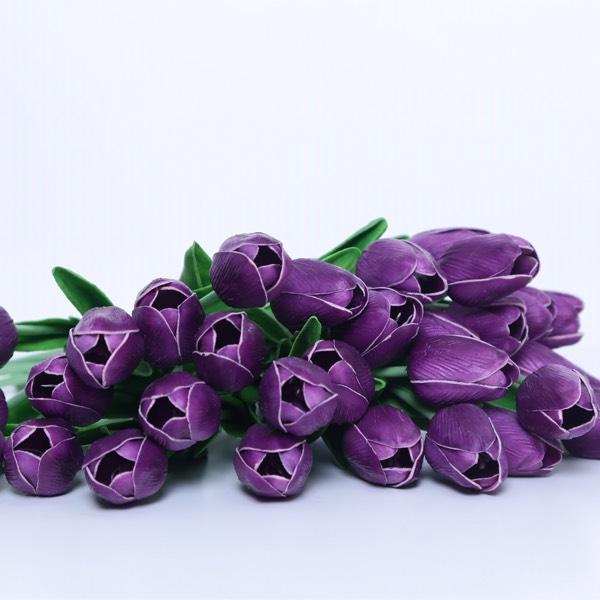 Flower - Tulips Purple0