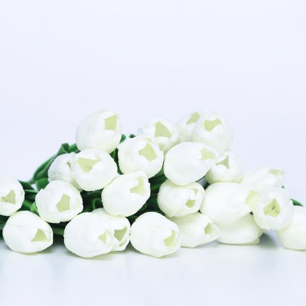 Flower - Tulips White0