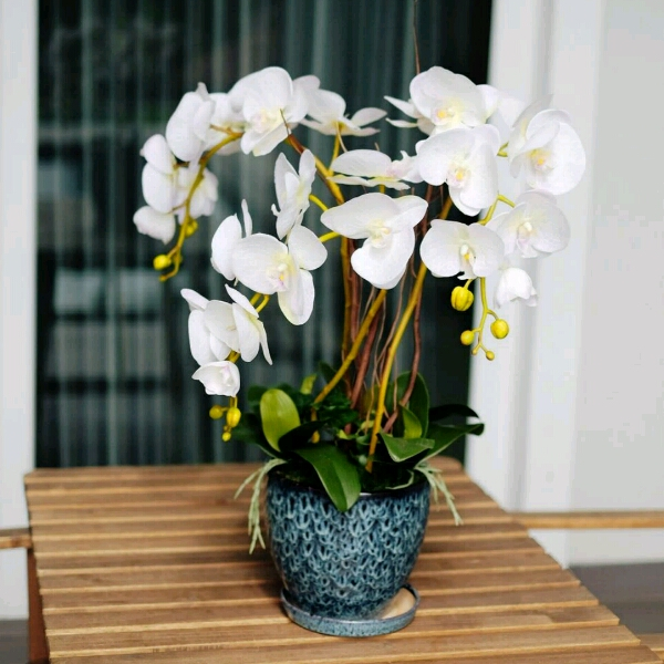 Orchid White 3 Stalks Blue Pot