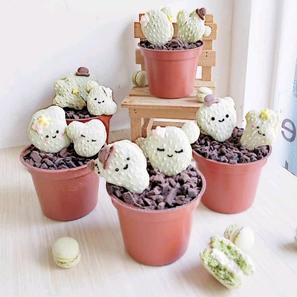28/4 Taiwan-styled Macaron Succulent Pot @Pandora's Box