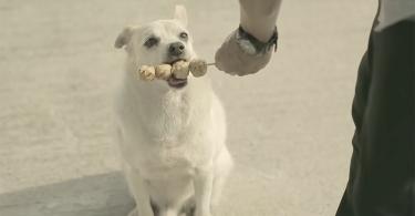 【義犬報恩】小狗是我們最忠誠的朋友