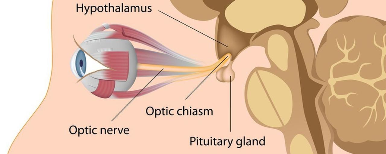 The anatomy of eyes. Image size:1280x512px