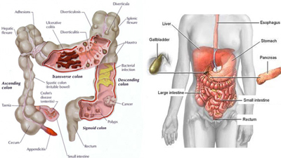 13 Tips To Care for Your Spleen, Liver & Large Intestine for Better Health. Image Size:400x225px