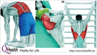34 Beautiful Pictures To See Which Muscle You're Stretching. Image Size:400x225px