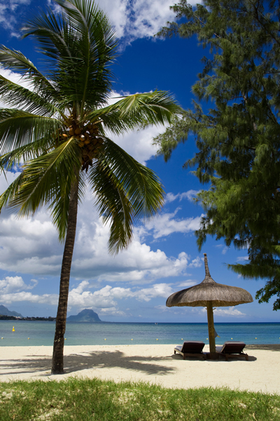Coconut Tree with coconut in Tropical Beach. Image size:400x600px