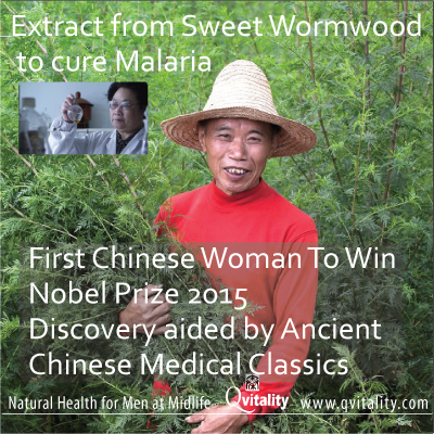 First Chinese Woman To Win Nobel Medicine Prize 2015. Sweet Wormwood Extract for Malaria. Image 2A.Image size:400x400px