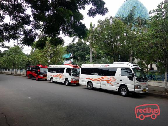 DB Trans Buses