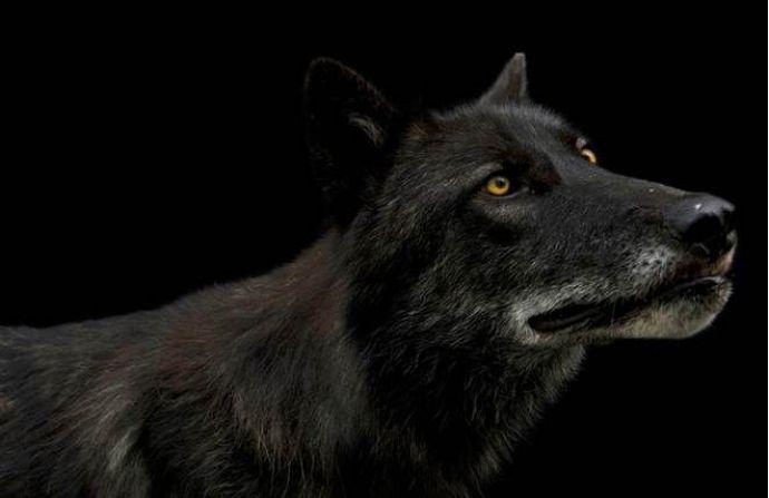 Joel Sartore, Endangered Species, American Wildlife Photographer, National Geographic