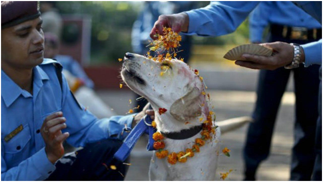 Nepal, Famous Nepal Festival, Dogs Festival, Dogs Loyalty, Festival On Dog's Loyalty, Tihar Festival