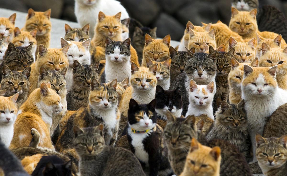 Japan, Island, Aoshima, Japanese Cat Island, Zao, Fox Village, Miyajima, Deer island, Ōkunoshima
