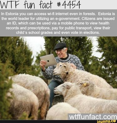 Estonia, Free Wi-Fi, Wi-Fi, Forest
