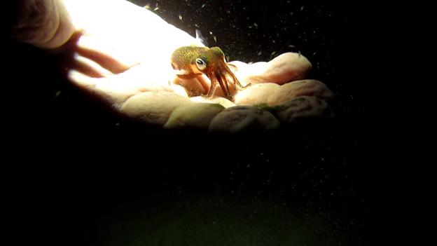 Miniature Animals, Animals, Monte Iberia Eleuth, Bumblebee bat, Brookesia Micra Chameleon, Minute salamander, Baluchistan Pygmy Jerboa, Dwarf lantern shark, Tiny Animals