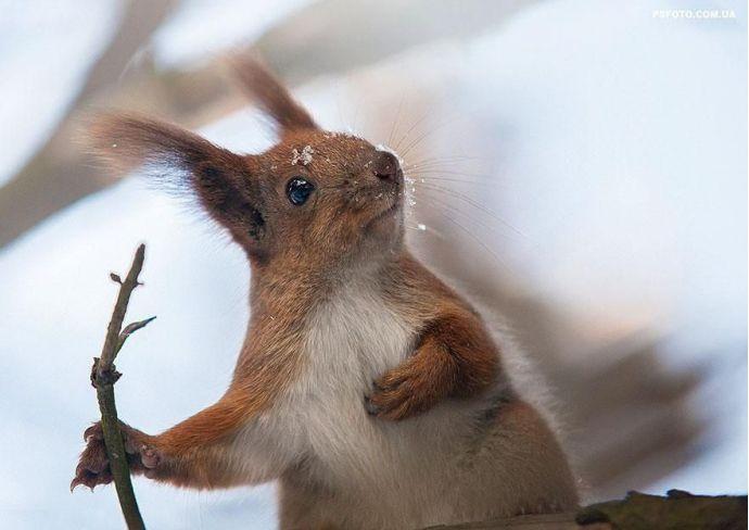 Photographer, Cats, Squirrels, Fur, Ukraine, Kiev, Animals