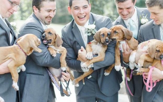 Puppy, Bouquet, Wedding