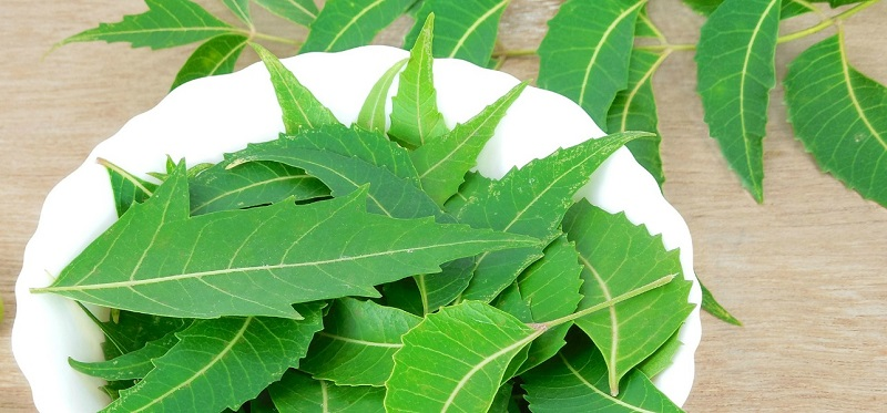 Dhanteras, Coriander Seeds, Neem Leaves, Prasad