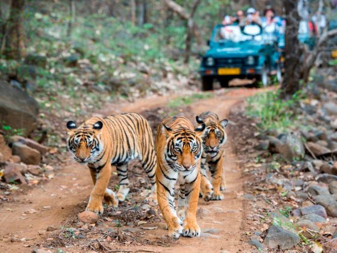nagpur, tadoba, TATR, Tadoba-Andhari Tiger Reserve, Pench Tiger Reserve, Melghat Reserve, buffer zone, night safari, Padmapur, Kondegaon gate, Mohurli, G Guruprasad, TATR deputy director, eco-development committee, EDC, Agarzari, Ajay Kopade