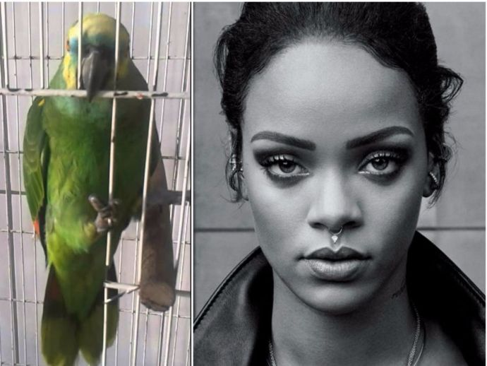 Rihanna, Parrot, Youtube, Eminem, The Monster