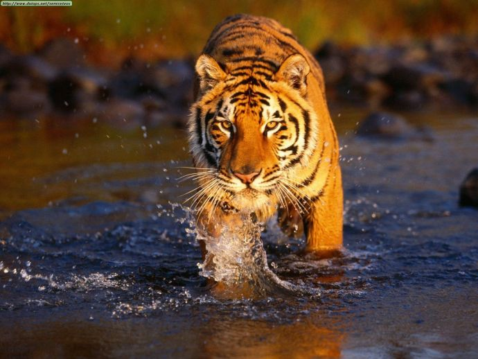 Nagpur, Events, Wildlife, Tiger, Photography, Umred