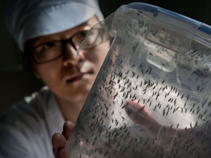 China, Mosquito, Zika, Dengue, Diseases, good mosquitos, world, medical, michigan state university