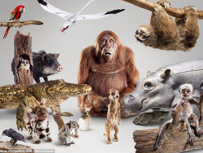 BBC, Animals, robots, camera, series, camouflage