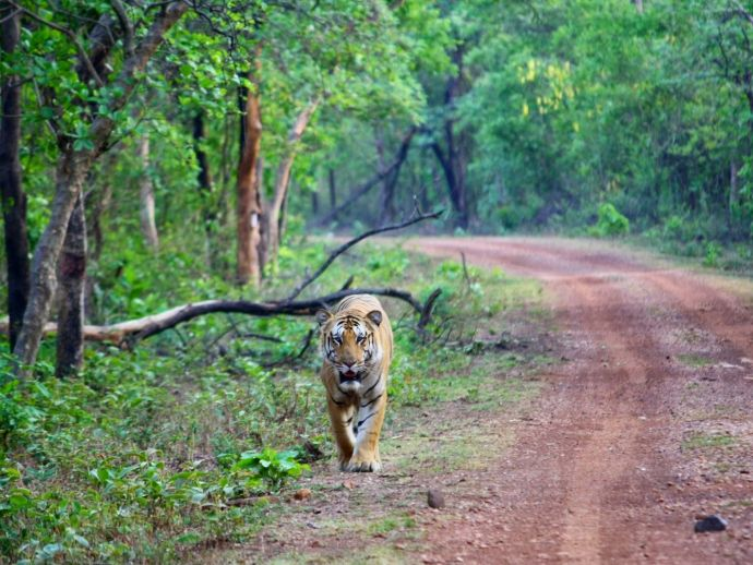 nagpur, Umred-Paoni-Karhandla Wildlife Sanctuary (UPKWS), Tadoba-Andhari Tiger Reserve (TATR), ghodazari sanctuary, Navegaon-Nagzira, kanha, pench, Wildlife Institute of India (WII), brahmapuri, bhandara, Wildlife Conservation & Development Centre's (WCDC