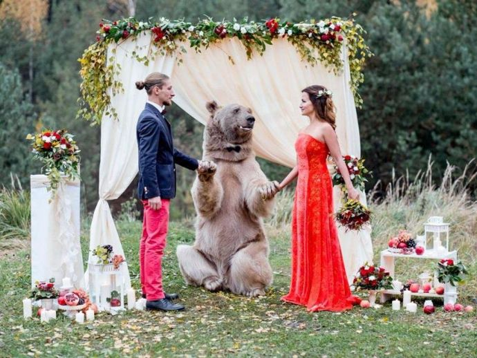 wedding, hoax, bear, officiate, Russian, photographer, sham, stepan, denis, kalashnikov, nelly