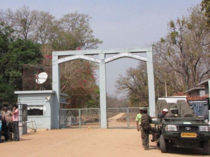 Nagpur, Pench, Tiger, Reserve, Maharashtra, Poaching, Racket, Exposed