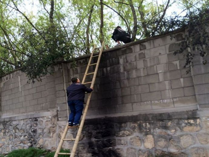 Chinese tourists, scale wall, ladders, tiger, accident, save ticket, chiana, Xian, Shaanxi