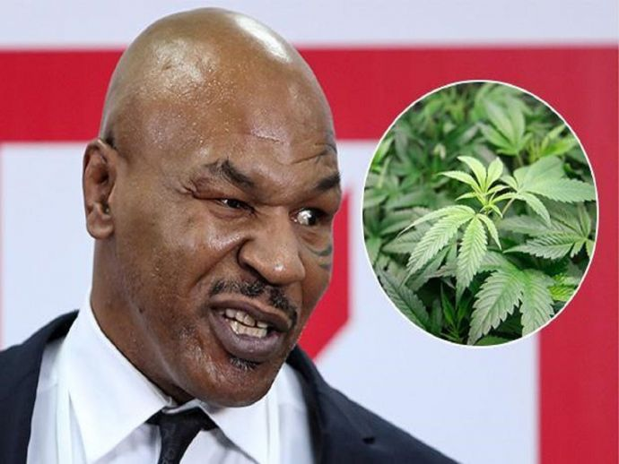 Mike Tyson, cannabis, marijauna, resort, US, California, Los Angeles, Mojave Desert, 40 acres, spread, huge, production, produce, cultivate, farming, facility, American Green, company, water, CBD, money, cost, spend, dope, drugs, medicine, medical