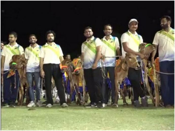 Cricket, Gujarat, cow, slaughter, tournament, vadodara, cattle, Uttar Pradesh, government, Cows Gifted In Gujarat Cricket Tournament, Gujarat Rabari Community Gifted Cows In Cricket, Players Get Cows as a Trophy, Cows as Trophies in Cricket Tournament